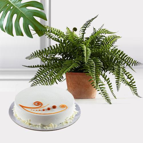 Divine Selection of Air Purifying Plant N Cake