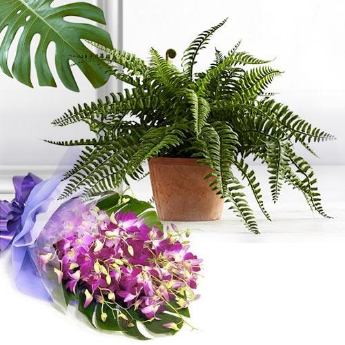 Blossoming Arrangement of Orchids with Air Purifying Plant