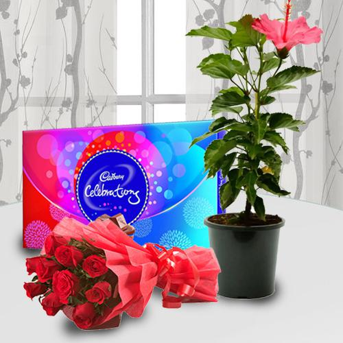 Gorgeous Bunch of Red Roses with Hibiscus Flowering Pot N Chocolates