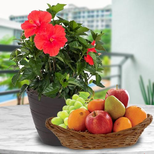 Tropical Fruits Basket with Flowering Hibiscus Plant
