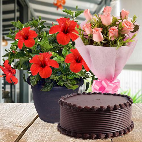 Good Luck Flowering Plant with Rose Bunch N Cake Combo