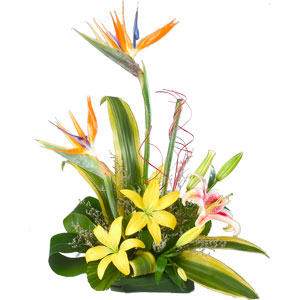 Expressive Moments in Love Arrangement of Lilies and Birds of Paradise