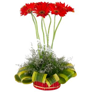 Eye-Catching Gerberas Designer Arrangement with Isle of Style