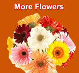 Send Flowers to Jalandhar